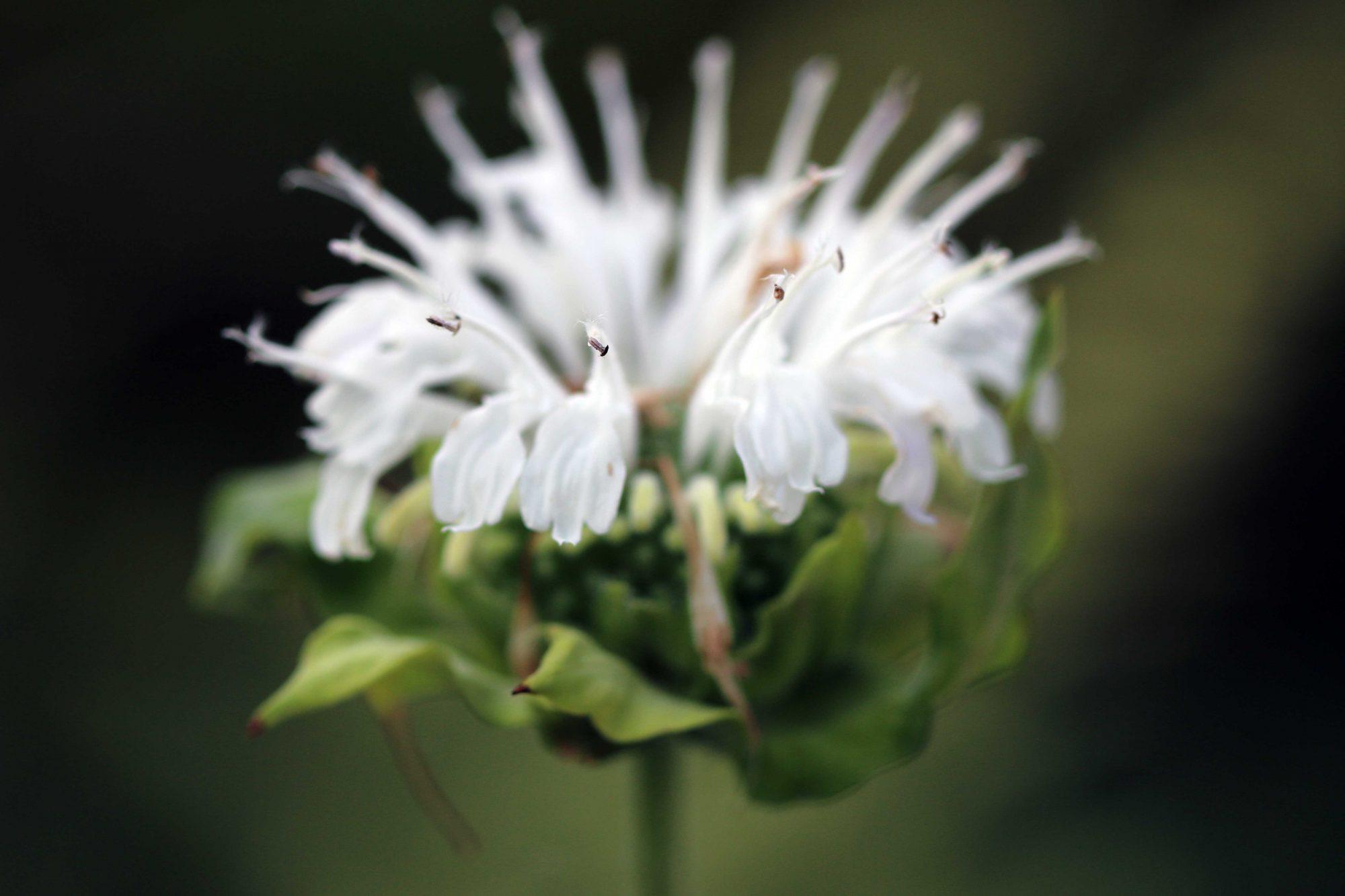 duurzame bloemen
