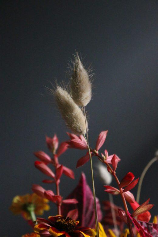 Lagurus ovatus, hazenstaartje, workshop barneveld